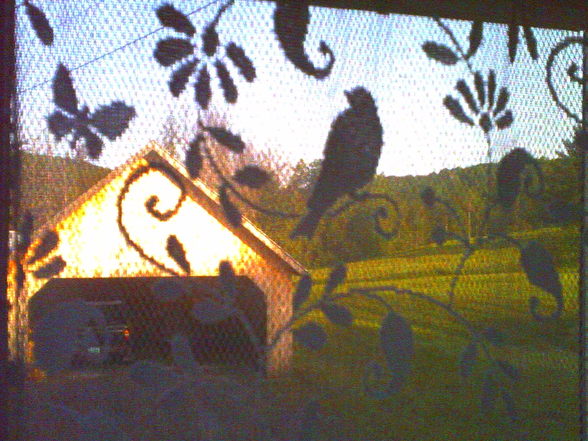 bird studio nest