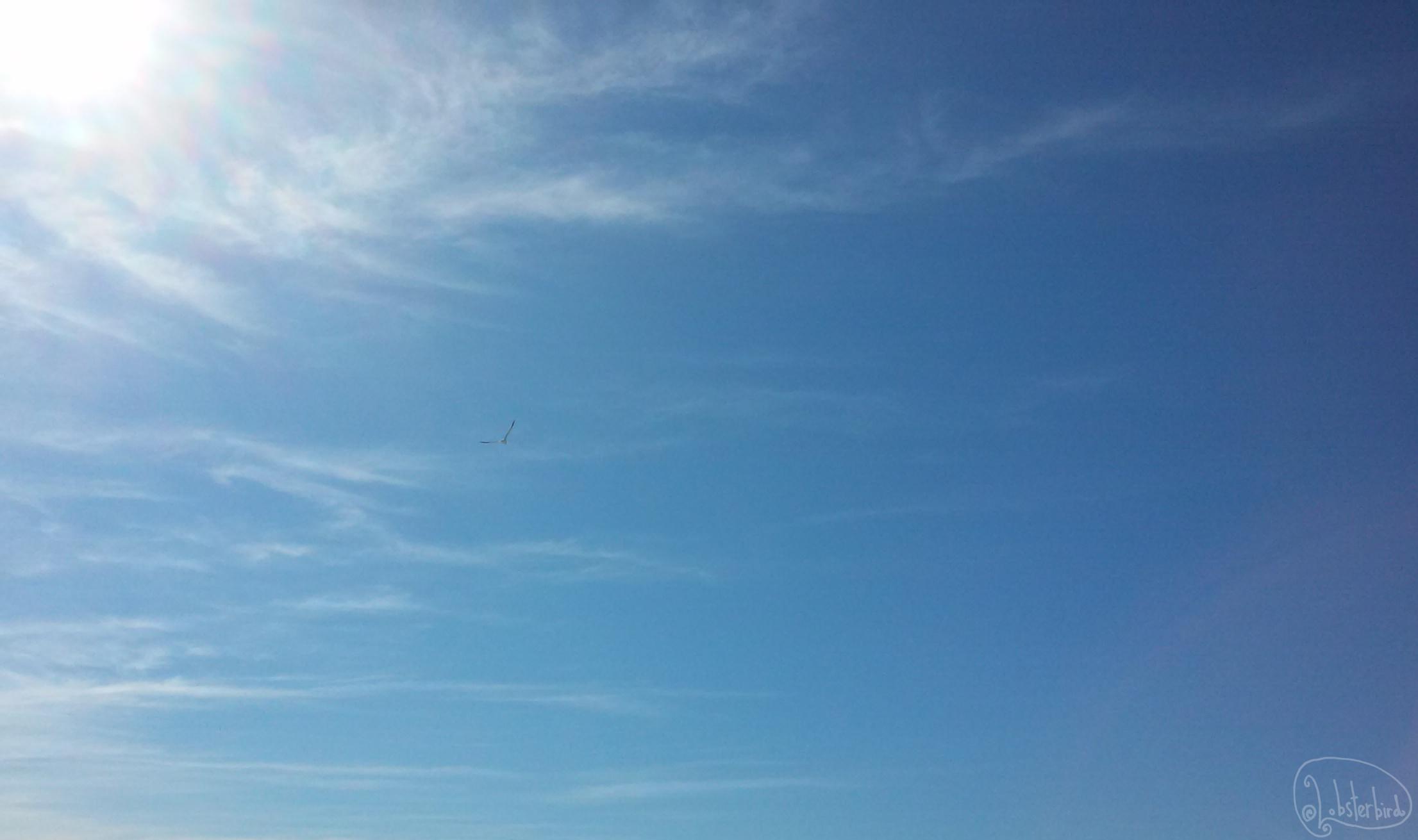 seagull soaring LBI